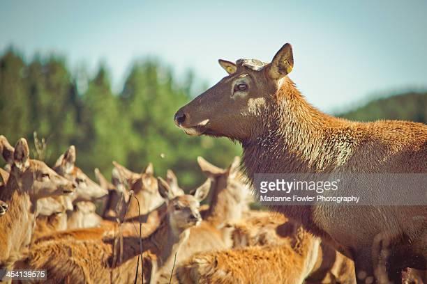 Deer farm
