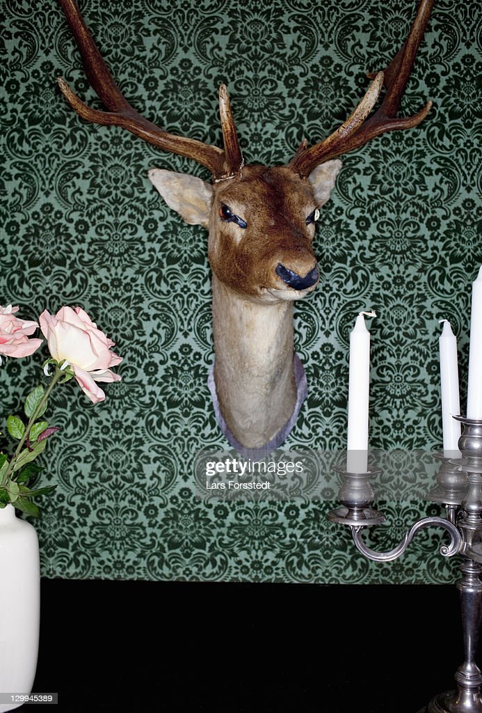 Deer head mounted on dining room wall