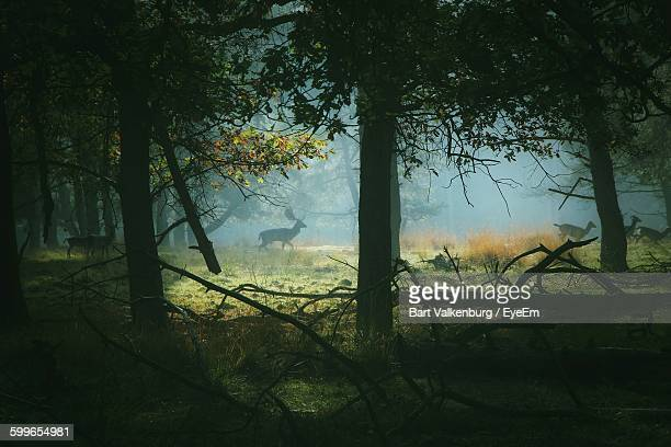 Deer In Forest During Foggy Weather
