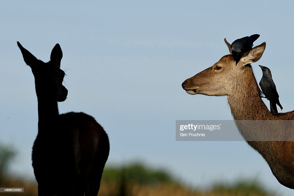 A deer is seen in Richmond Park on the first day of autumn on September 23, 2015 in London, England. The autumnal equinox usually falls around September 22 or 23 as the sun crosses the celestial equator, when day and night are roughly equal length.