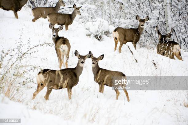 Deer on snow covered mountain