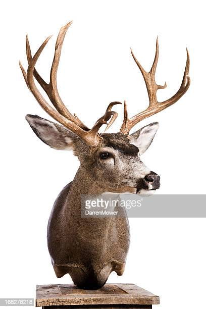 Taxidermy Stock Photos And Pictures Getty Images