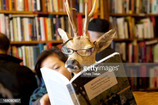 Deer reading book in library : Stock Photo