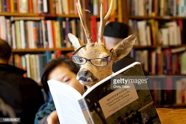 Deer reading book in library