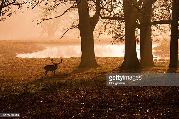 Deer silhouette in a hazy sunset