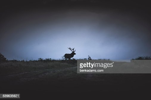 Deer Silhouette on Hillside : Stock Photo