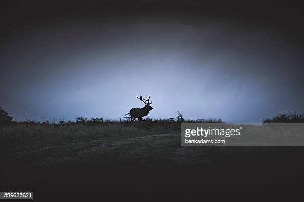 Deer Silhouette on Hillside