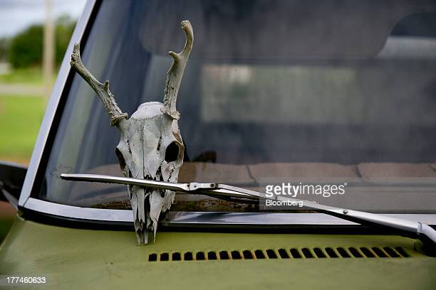 A deer skull is held in place by a windshield wiper on a Ford Motor Co pickup truck at Bullington Farms in Shoals North Carolina US on Monday Aug 19...