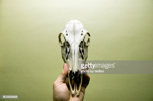 Deer skull : Bildbanksbilder