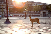 Deer standing at Place Concorde