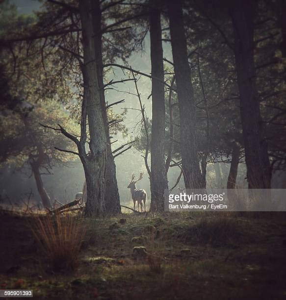 Deer Standing By Trees In Forest