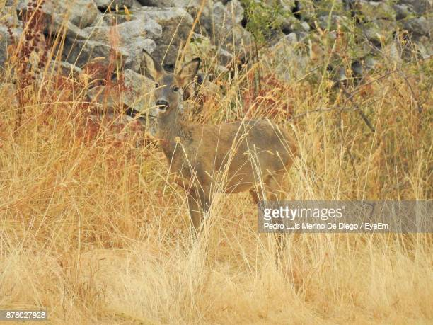 Deer Standing On Grassy Field At Forest