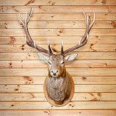 Deer Trophy (XXL)