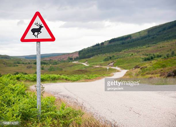 Veado no país Estrada Sinal de Aviso