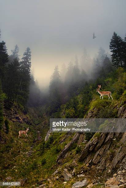 Deer's Rendezvous