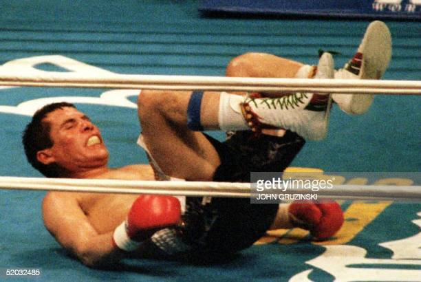 Defending WBC super lightweight champion Julio Cesar Chavez of Mexico hits the canvas after being knocked down by challenger Frankie Randall of the...