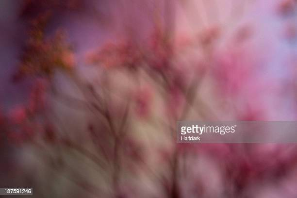 A defocused bunch of pink Statice (Limonium) against a pastel background