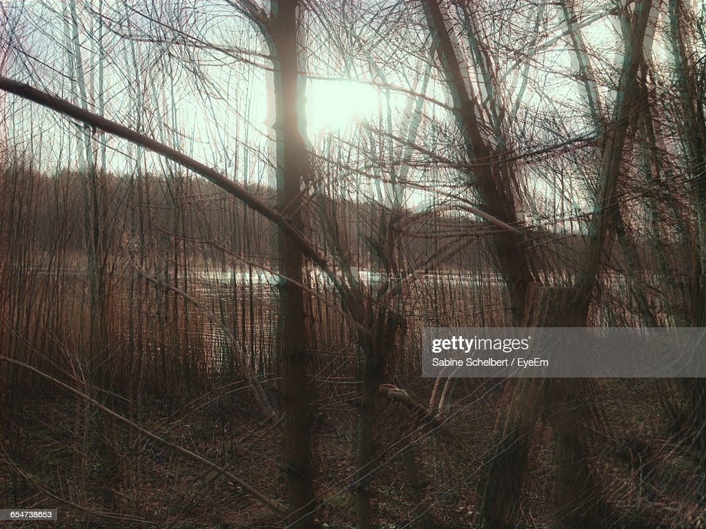 Defocused Image Of Bare Trees In Forest