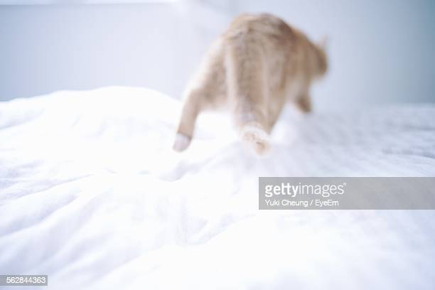 Defocused Image Of Cat Running On Bed
