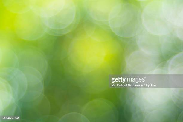 Defocused Image Of Plants