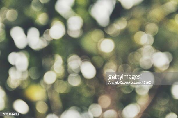 Defocused Image Of Trees