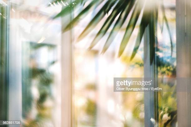 Defocused Image Of Window