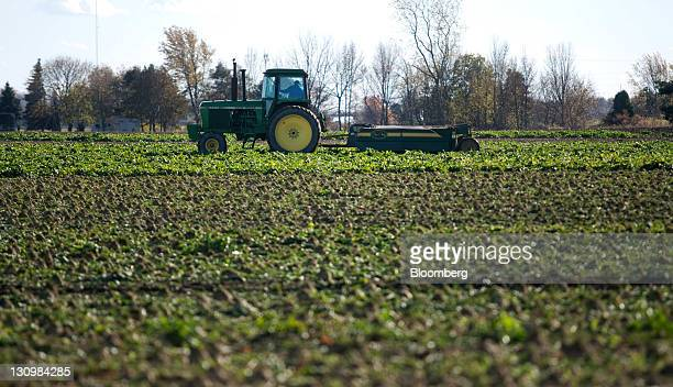 A defoliator cuts the green tops off of sugar beets before they are harvested in Bay City Michigan US on Monday Oct 24 2011 US sugar supplies this...
