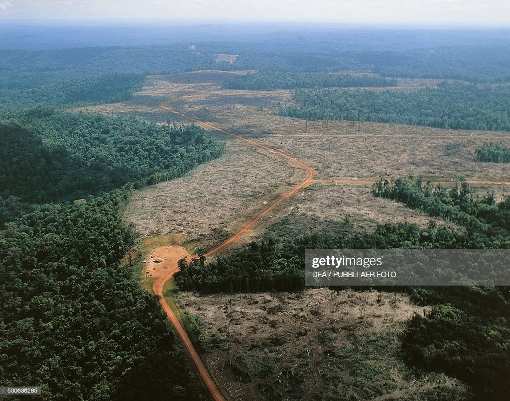 Deforestation along the Jari River a northern tributary of the Amazon river Brazil