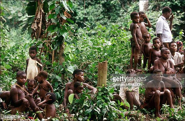 Deforestation At The Aka Pygmies In Central African Republic April 1992 Gathering Of Pygmy Women