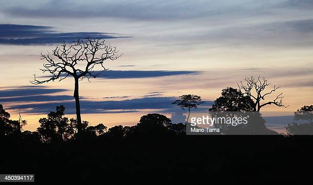 Deforestation is seen along the Interoceanic Highway in the Amazon lowlands on November 16 2013 in Madre de Dios region Peru The biologically diverse...