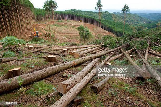 Deforestation of Cedar Forest