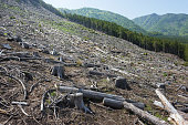 Deforestation by forest felling in Japan