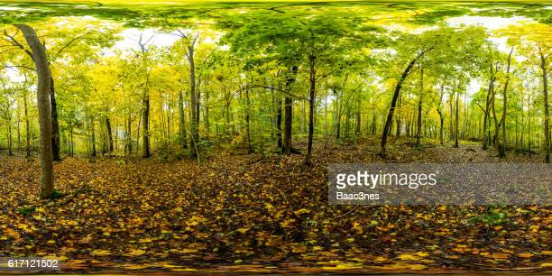 360 degree panorama shot - Autumn in the forest (Norway)