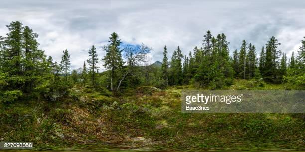 360 degree panorama shot - Forest near Gaustatoppen, Norway