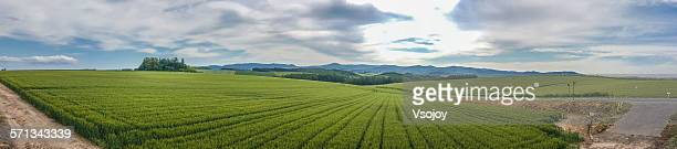 360 degree panorama view wheat field, Biei