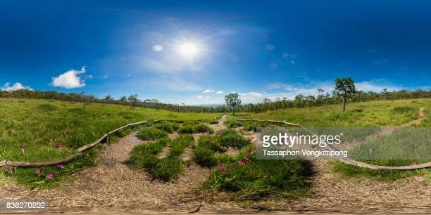 360 degree view of Curcuma sessilis park field forest in Chaiyapoom, Thailand