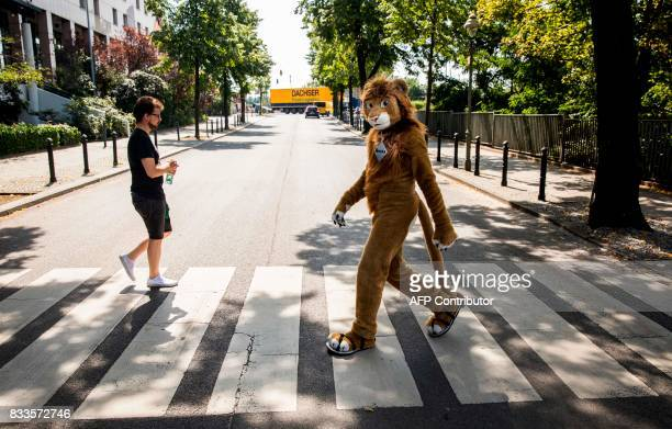 A delegate dressed in a furry Lion costume walks across a Zebra crossing to the convention centre at the Eurofurence convention in Berlin on August...