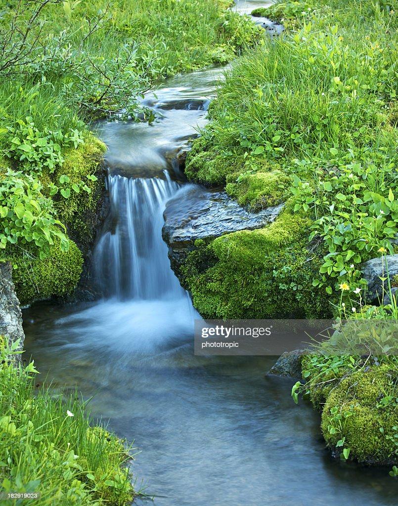 delicate alpine stream