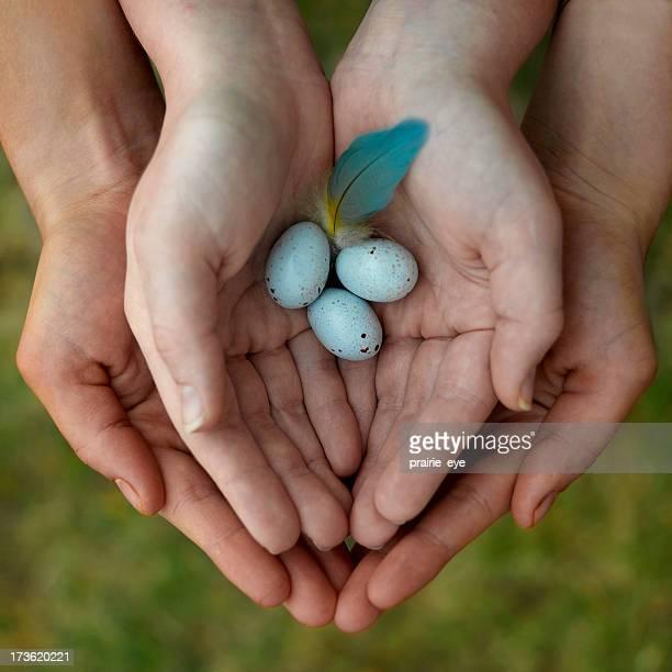 Delicate Eggs