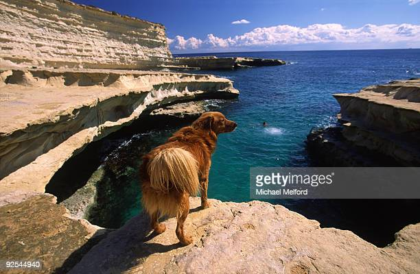 A water dog on a cliff above Peter's Pool.