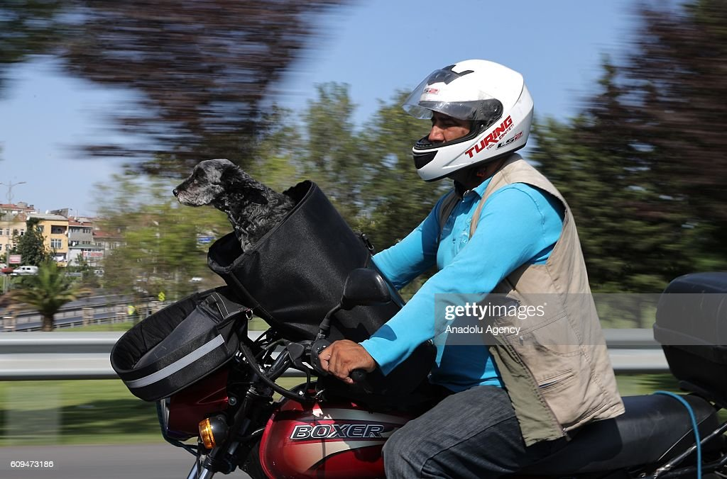 Delivery man Murat Ozgen, is seen with his dog 'zeytin' (olive) on his motorbike in Istanbul, Turkey on September 10, 2016. Ozgen goes to work with his dog everyday, as 'Zeytin' gets bored alone while her owner is at work.