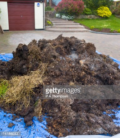 Delivery of horse manure on front drive, Wirral, Merseyside, England
