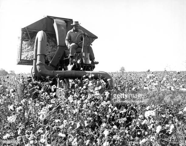 A Delta and Pineland Company farmer drives a mechanical picker through a cotton field Scott Mississippi June 1959 It can pick as much cotton as forty...