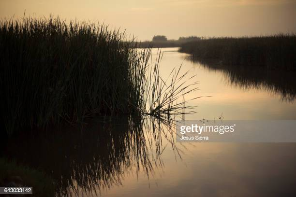 Delta del Ebro Natural Park. Encanyssada lagoon. The landscape of the Ebro Delta with rice fields. Tarragone province. Spain.