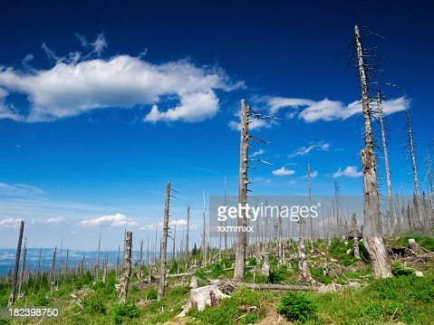 Demolished and dead trees against blue with white clouds