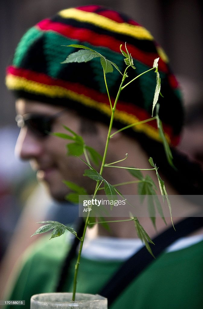 A demonstrator holds a cannabis plant during a march demanding the legalization of marijuana on June 8, 2013, in Sao Paulo, Brazil.