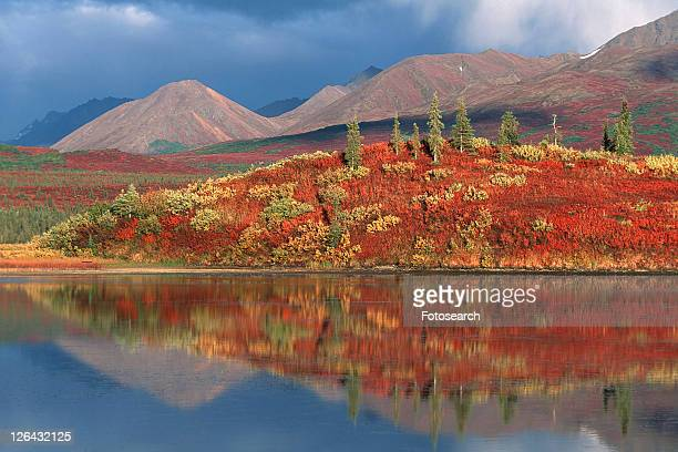 denali, autumn, conifer forest, Canada, beautiful, fall colors, alaska
