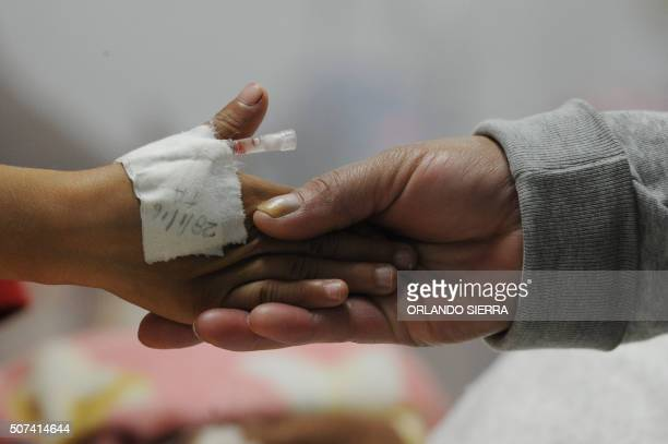 A dengue fever patient is treated at 'Hospital Escuela Universitario' in Tegucigalpa on January 29 2016 The mosquitoes which carry dengue usually...