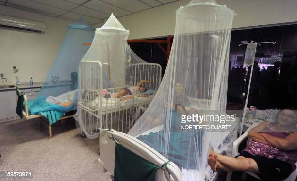 Dengue fever patients are treated in a hospital in Asuncion on January 16 2013 According to Paraguay's Ministry of Health there are about 500...