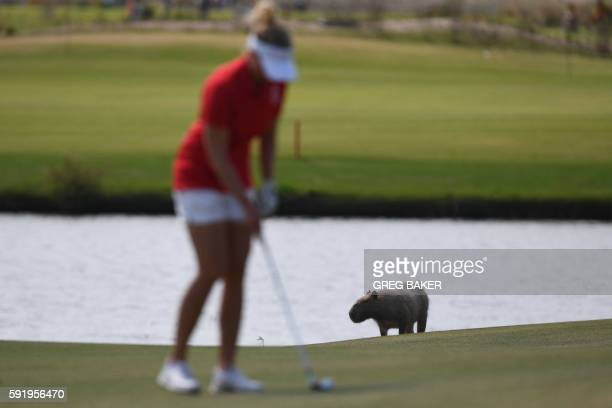 Denmark's Nanna Madsen competes as a Capybara is seen in the background in the Women's individual stroke play at the Olympic Golf course during the...